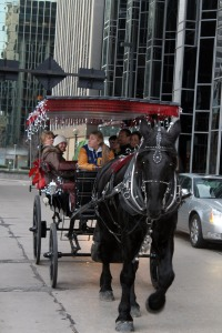 Carriage Ride