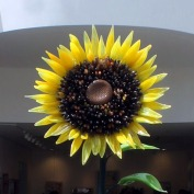 Artist Gary Guydosh's 8-foot glass sunflower greets visitors in the Welcome Center of Phipps Conservatory and Botanical Gardens