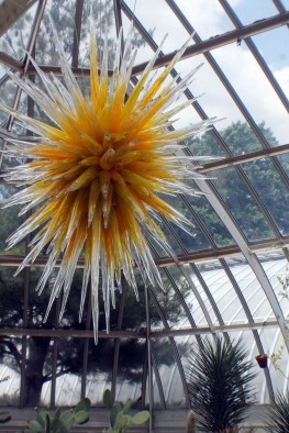 'Desert Gold Star' by Dale Chihuly in the Desert Room.